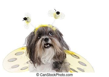 Süßer Hund, der wie eine Biene verkleidet ist
