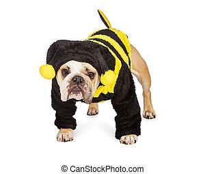 Süßer Hund in Halloween Bienenkostüm.