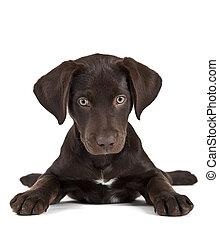 Süßer Hund
