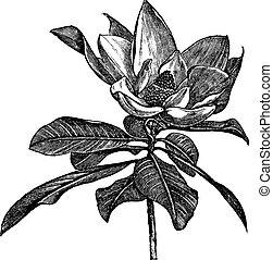 Südliche Magnolien oder Magnolia Grandiflora Jahrgang-Garab