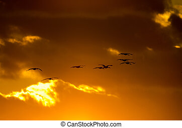 Sandhill Kranen bei Sonnenuntergang