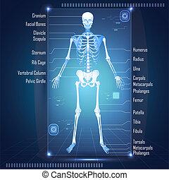 Scanne nach Skelett
