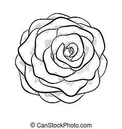 Schöne monochrome schwarze und weiße Rose isoliert auf weißem Hintergrund