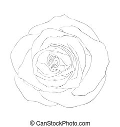 Schöne monochrome schwarze und weiße Rose isoliert auf weißem Hintergrund.