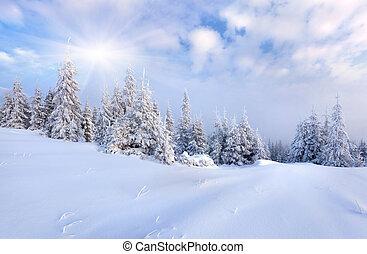 Schöne Winterlandschaft mit Schnee bedeckten Bäumen.