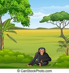 schimpanse, savanne, karikatur