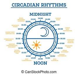schlaf, elements., zirkadisch, aufwachen, schema, cycle., infographic, rhythm.