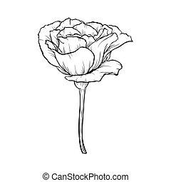 Schwarze und weiße Rose isoliert auf weißem Hintergrund.