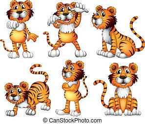 Sechs Positionen eines Tigers
