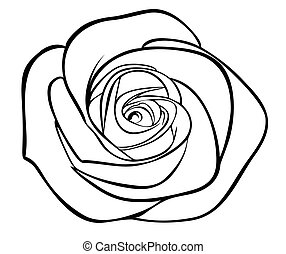 silhouette, grobdarstellung, freigestellt, rose, schwarz, weißes