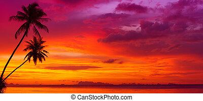 silhouette, panorama, aus, bäume, wasserlandschaft, tropische , sonnenuntergang, handfläche