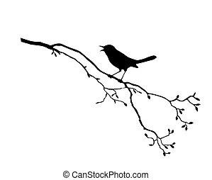 Silhouette vom Vogel auf Zweig