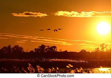 Silhouette von Sandhill-Kranen bei Sonnenuntergang