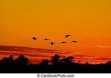 Silhouette von Sandhill-Kranen, die bei Sonnenuntergang fliegen