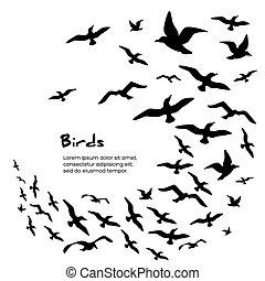 Silhouetten fliegender Vögel