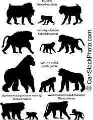 Silhouetten von Affen.