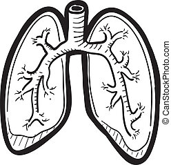 skizze, lunge, menschliche