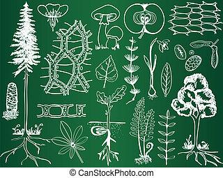 skizzen, botanik, biologie, schule, -, pflanze, abbildung, brett