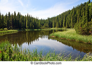 Sommerbergwaldsee