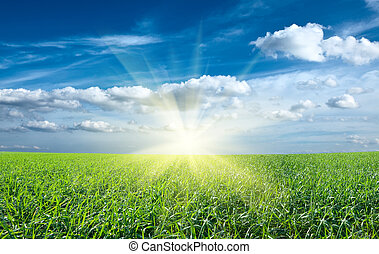 Sonne und grünes, frisches Gras unter blauem Himmel.