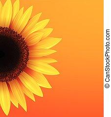 Sonnenblumen Hintergrund.
