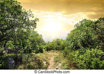 Sonnenlicht im Bergwald