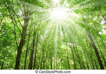 Sonnenlicht in Bäumen des Waldes