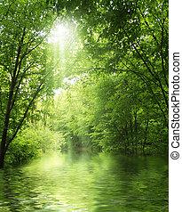 Sonnenstrahlen im grünen Wald mit Wasser