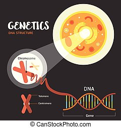 struktur, dns, genetik