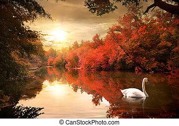 Swan in the autmn.