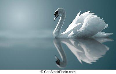 Swan Reflektionen