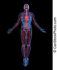 system, hervorgehoben, vaskulär