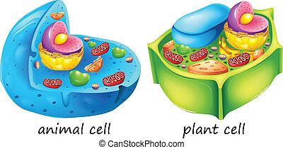Tier- und Pflanzenzellen.