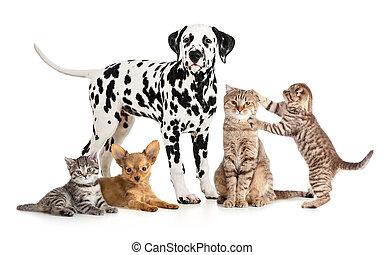 Tierversuche für Tiermedizin oder Tierhandlung isoliert