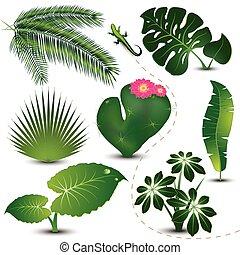 Tropische Blättersammlung