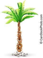 Tropische Kokospalme mit grünen Blättern