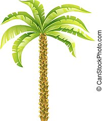 Tropische Kokospalme mit grünen Blättern Vektorgrafik. Eps10 isoliert auf weißem Hintergrund