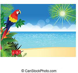tropische , macaw, sandstrand, backgroun