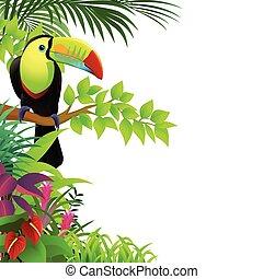 tropische , tukan, wald, vogel
