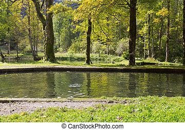 Troutfisch schwimmen im Süßwasser, im Herbst in Deutschland, Europa.