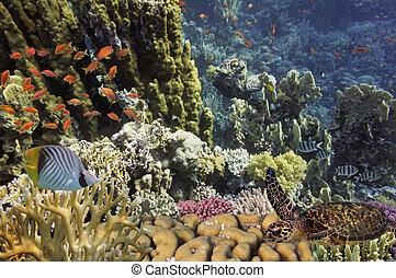 Turtle und tropisches Riff im Roten Meer.