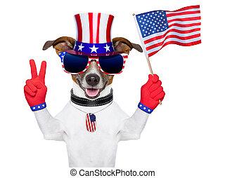 Usa amerikanischer Hund.