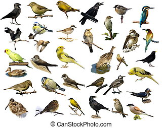 Vögel isoliert auf Weiß (35)