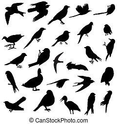 Vögel schluchzen