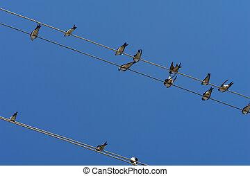 Vögel.