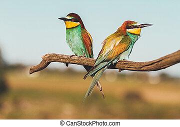 vögel, zweig, exotische , sitzen