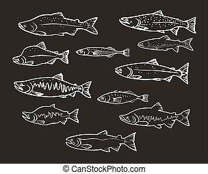Vector Set: Lachsfische.