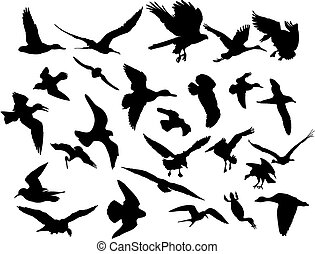 Vektor fliegende Vögel