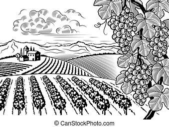 Vineyard Tal Landschaft schwarz und weiß
