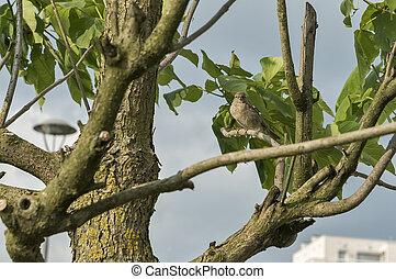 Vogel auf einem Baumzweig.